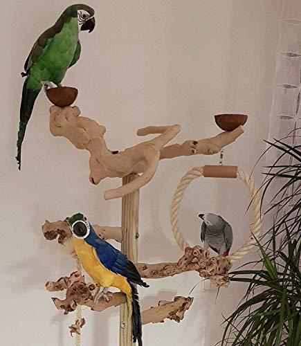 Kletterbaum für Vögel Papageien Freisitz Kaffeeholz, Freiflug Landeplatz Papageienspielzeug 1,60